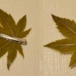 manualidades con hojas plastificadas Destacada