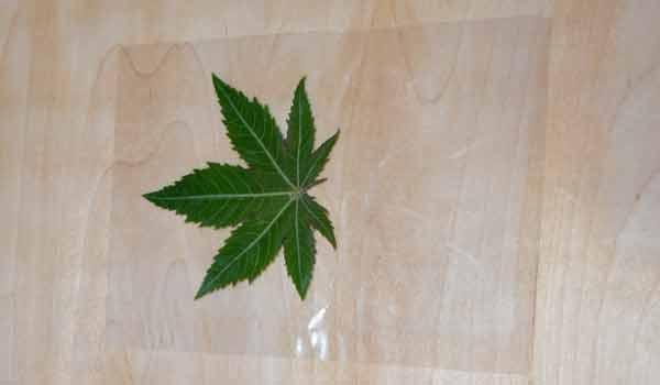 manualidades con hojas plastificadas Plastificado